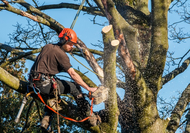 Shaping, Tree Trimming Services Offered by Nature's Touch