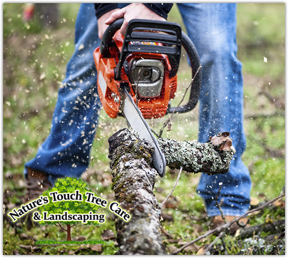 Nature's Touch Tree Care - Tree Service in Eden Prairie
